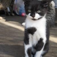 鞆の浦の子猫